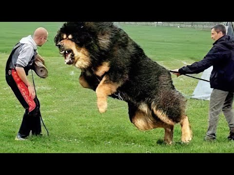 10 Most Powerful Dogs in the World