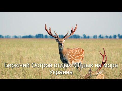 Бирючий Остров отдых. Отдых на море Украина