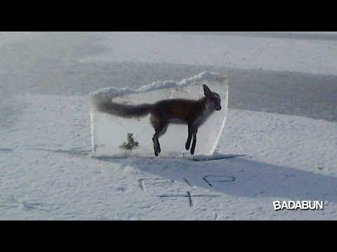 7 Animales que quedaron congelados en el tiempo