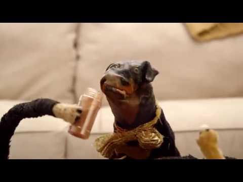 """The Jack & Triumph Show (2016) - """"Triumph Goes Viral"""" Promo"""