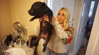 WE GOT A MINI PET PIG!!! (BAD IDEA)