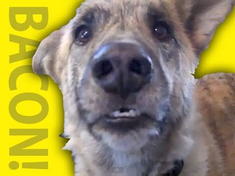 Ultimate Dog Tease Funny Video