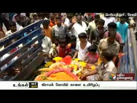Salem-Periyaputhur-people-mourn-temple-bulls-death