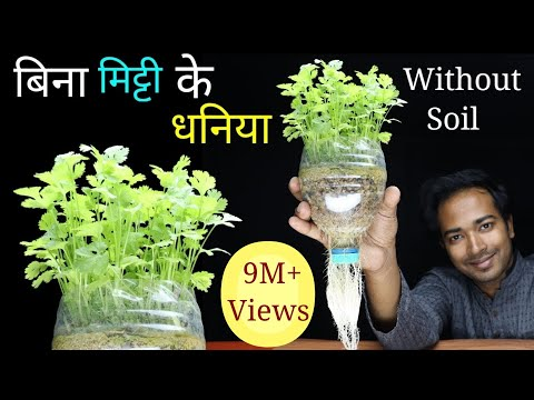 How To Grow Coriander At Home Without Soil | Grow Coriander Or Dhaniya In Pot