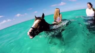 in acqua a cavallo