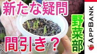 『AppBank野菜部』野菜は疑問がいっぱいだ!