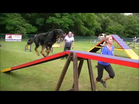 Agility - Beauceron Jethan - highlights 2016