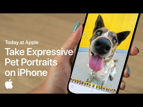 Take Expressive Pet Portraits on iPhone with Sophie Gamand | Apple