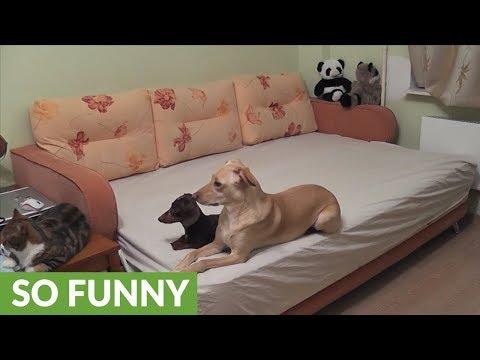 cosa-fanno-i-cani-quando-sono-soli-a-casa