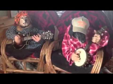 [Clip] Chó chơi đàn ghita :))