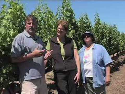 Leaf Removal to Manage Grape Sun Exposure - Sonoma