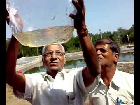 Prawn Seed Supply Aurangabad 2010 -2.mp4