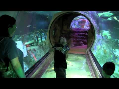 sealife - Amazing aquarium that you have to see to believe! I took my family there and filmed this video. I was shocked to see what they could do with an aquarium in a...