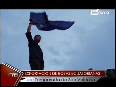 Exportación de rosas ecuatorianas por temporada de San Valentín