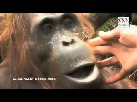 olio di palma: quello che devi assolutamente sapere!