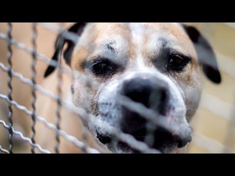 Hessen: Totgebissen - Säugling stirbt nach Hundeattacke