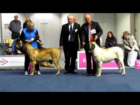 Dortmund Germany Bundessieger Dog Show 17.10.2015