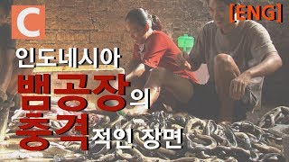 뱀 비린내가 가득 찬 뱀 공장_[ENG SUB] A snake factory full of snake-fishy smells