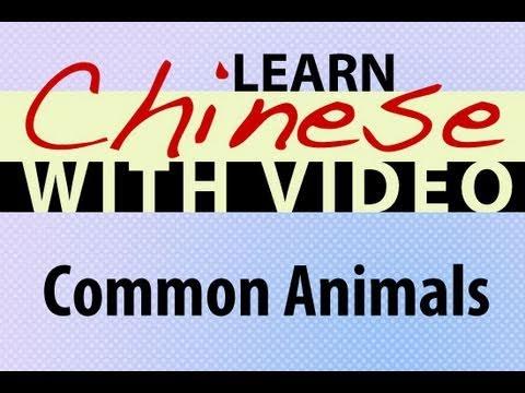 Tiere und Tiernamen - Chinesische Vokabeln