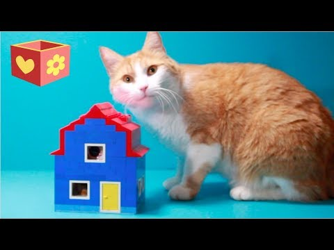 Funny cat videos - Simba and George  Cute cat  Building a Lego house  For children