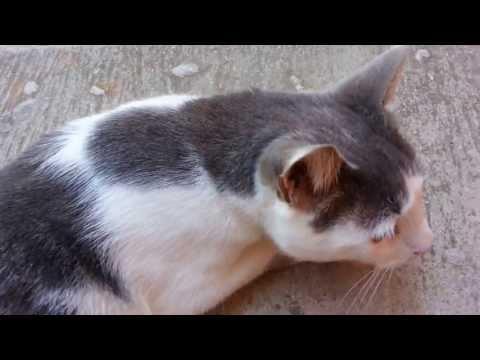 gatto apre 5 porte per uscire