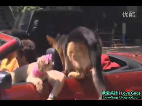 如果導盲犬跟別人跑了要怎麼辦呢!?!?