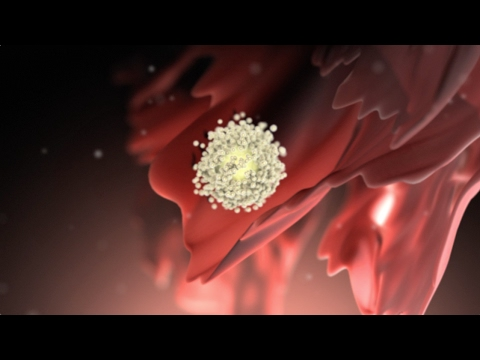 ovaries - View more AMAZING medical animations at http://www.nucleuslibrary.com To download FREE medical animations of pregnancy and birth, visit http://www.prenateper...