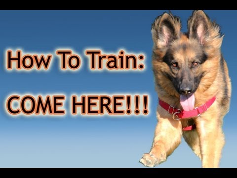 dog training - This video is about reliably teaching your dog how to come to you when you call them. In order to teach this behavior, we have to first consider why a dog wi...