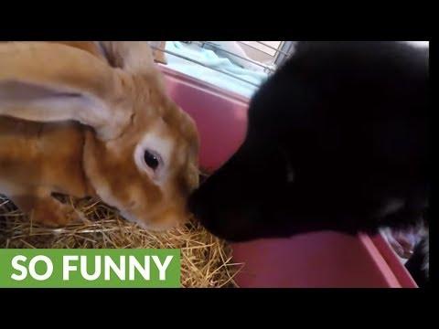 il-cane-e-il-coniglietto