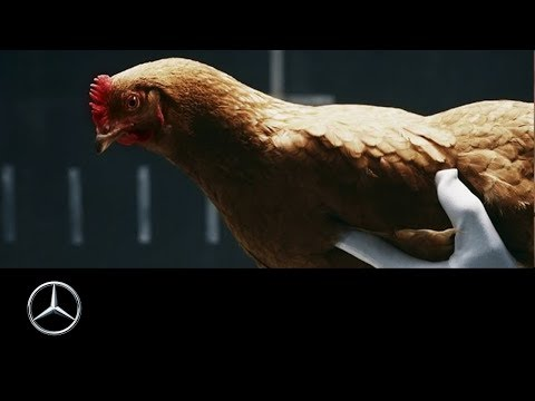 Mercedes Benz Magic Body Control explicado con una gallina