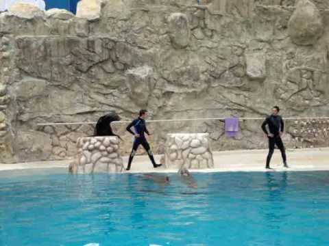 Show de Delfines en Six Flags México. Beto cantando.MPG