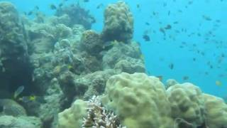 Orpheus Island Australia  city photos : SCUBA Diving: Pioneer Bay, Orpheus Island, Australia