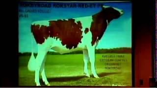 Sabetha (KS) United States  city photos gallery : Rokeyroad Holsteins - Sabetha, Kansas