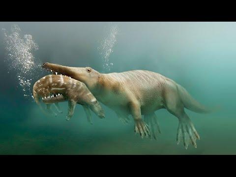 Пути эволюции — Сухопутные киты (Документальные фильмы, передачи HD) (видео)