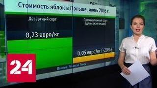 """""""Агроновости"""": яблоки из Ливана и Польши"""