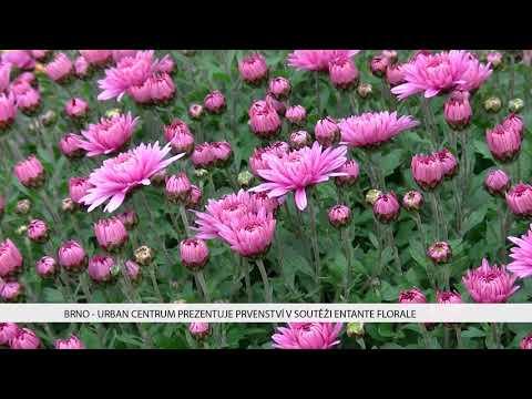 TV Brno 1: 3.11.2017 Urban centrum prezentuje prvenství v soutěži Entante Florale