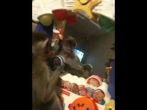 Mono asustandose al verse al espejo