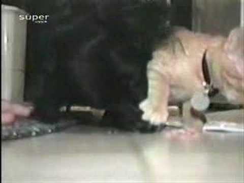 El gato egoísta