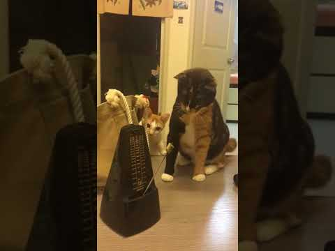 These two cats getting freaked out by a simple metronome