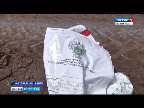 О превышении токсичности в почве Волгоградской области