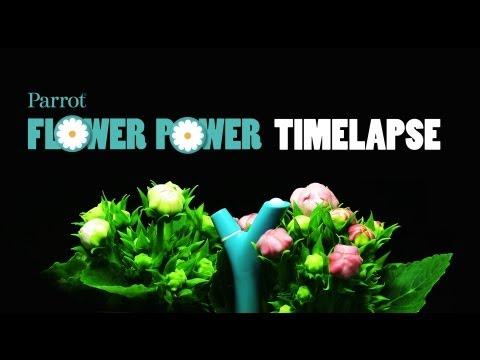 Parrot Flower Power skrbnik rož - moder