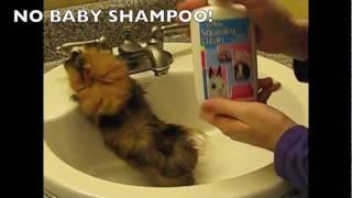 Video How To Bathe A Guinea Pig: Nervous Guinea Pigs MP3, 3GP, MP4, WEBM, AVI, FLV Agustus 2018