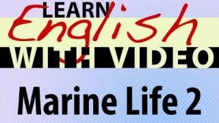 Marine Life 2 Lesson
