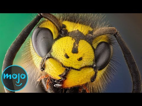 Top 10 Most Painful Insect Bites