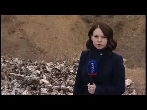 Анонс: в Березовском районе найдены сотни голов мертвых животных - DomaVideo.Ru