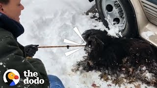Severely Matted Dog Gets Rescued from a Blizzard    The Dodo by The Dodo