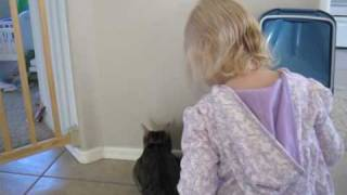 Cat Care And Training Guide YouTube video