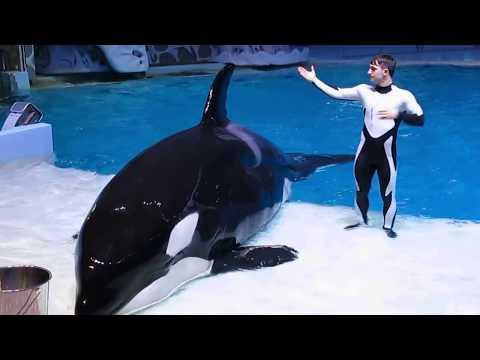 Москвариум: дельфины и косатки (видео)