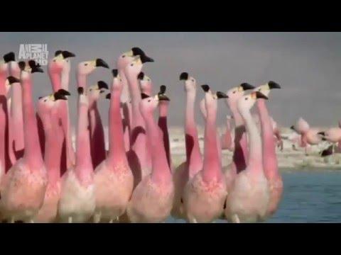 Смешные животные | Танец лебедей