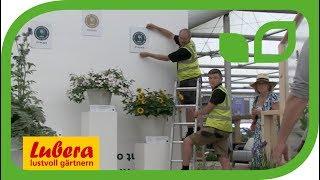 Chelsea Flower Show 2018 - Pflanze des Jahres Hydrangea Runaway Bride